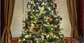 Tips To Decorate Your Christmas Tree