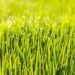 Seed or Sod – What Is Best?