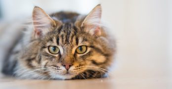The Do's and Don'ts of What to Feed Your New Cat